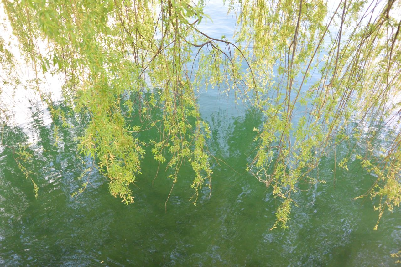 Tree branches above water